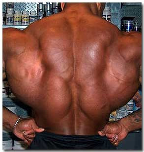 Wide Back Muscles