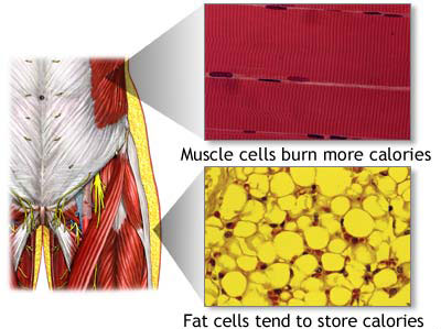What Actually Happens To Fat Cells When Working Out?
