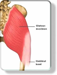 Glutes and Butt Muscles