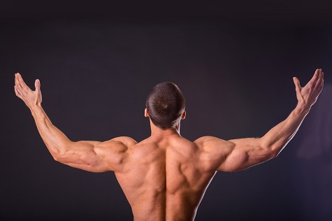 BuildingMuscle-40article