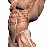 Muscle Fiber Specific Training