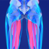 Meet Your Inner Thigh – UNLOCK & Develop Your Adductors